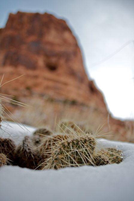 Snow Cacti