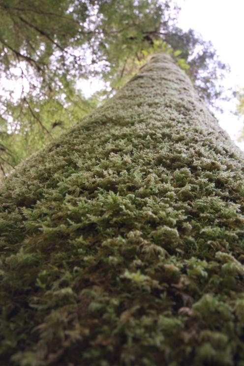 Moss Monster