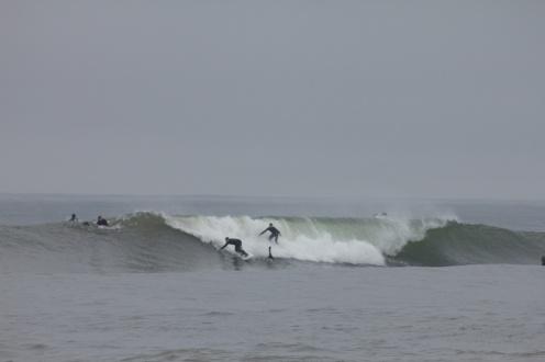 Wavesnake